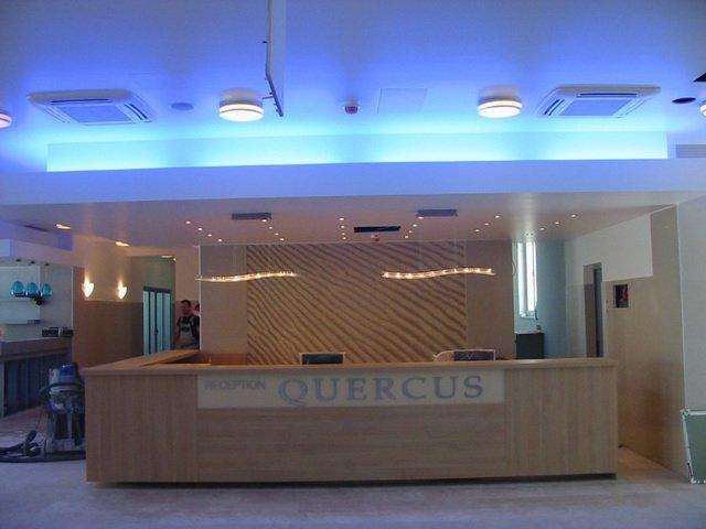 quercus005.JPG